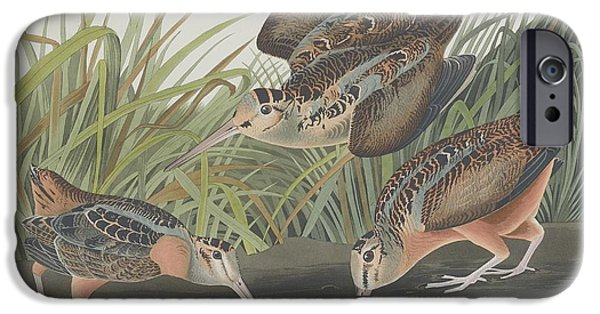 American Woodcock IPhone 6s Case by John James Audubon