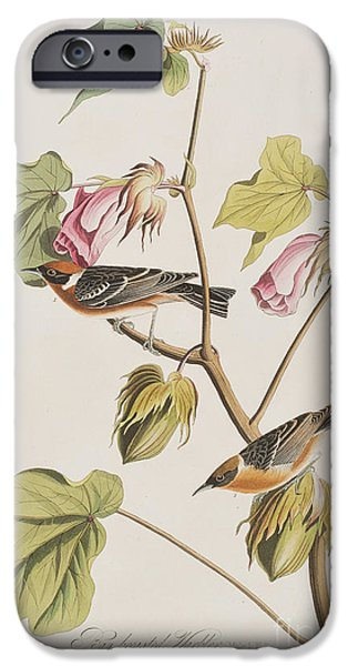 Bay Breasted Warbler IPhone Case by John James Audubon