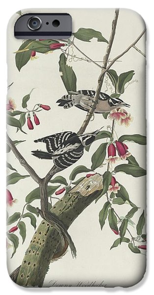 Downy Woodpecker IPhone Case by John James Audubon