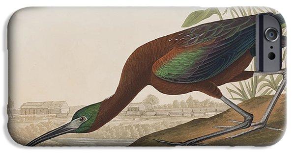 Glossy Ibis IPhone 6s Case by John James Audubon