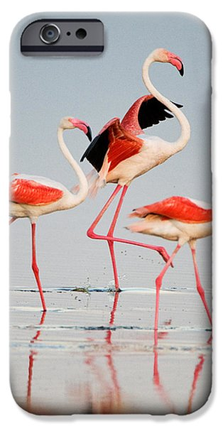 Greater Flamingos Phoenicopterus Roseus IPhone 6s Case by Panoramic Images