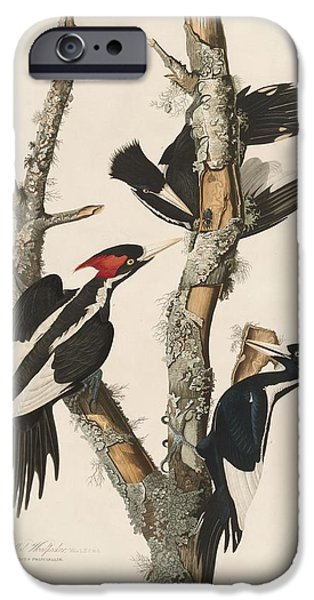 Ivory-billed Woodpecker IPhone Case by John James Audubon