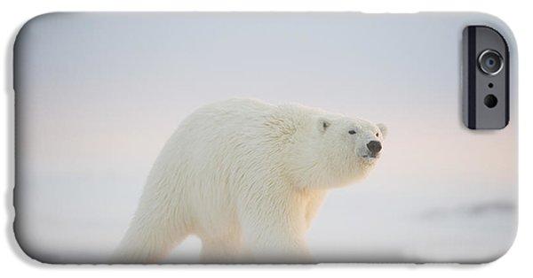 Polar Bear  Ursus Maritimus , Young IPhone 6s Case by Steven Kazlowski