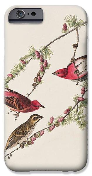 Purple Finch IPhone 6s Case by John James Audubon