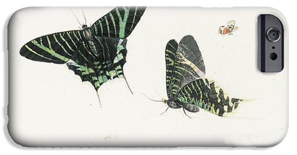 Studies Of Two Butterflies IPhone 6s Case by Anton Henstenburgh