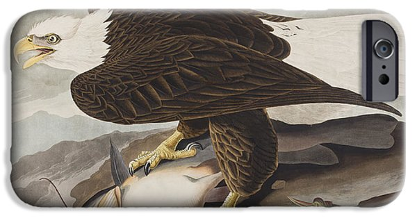 White-headed Eagle IPhone Case by John James Audubon