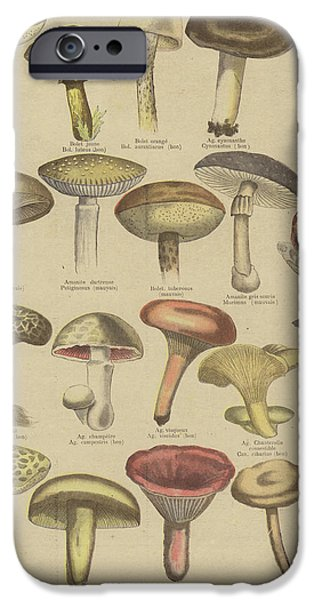 Edible And Poisonous Mushrooms IPhone 6s Case by French School
