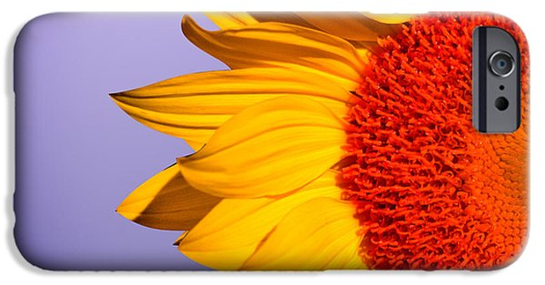 Sunflowers IPhone 6s Case by Mark Ashkenazi
