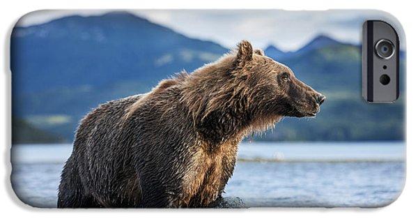 Coastal Brown Bear  Ursus Arctos IPhone 6s Case by Paul Souders