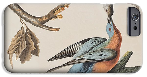 Passenger Pigeon IPhone 6s Case by John James Audubon