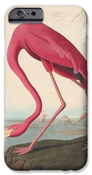 American Flamingo IPhone Case by John James Audubon