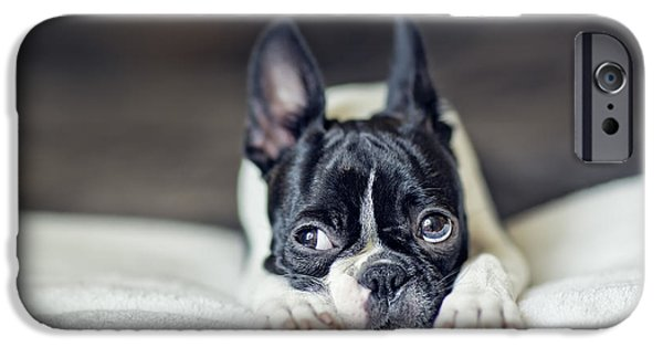 Boston Terrier Puppy IPhone Case by Nailia Schwarz