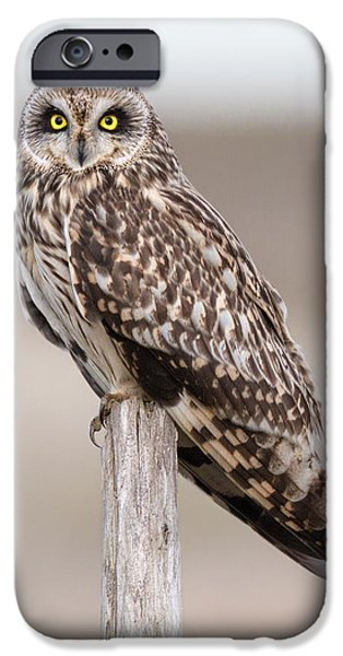 Short Eared Owl IPhone 6s Case by Ian Hufton