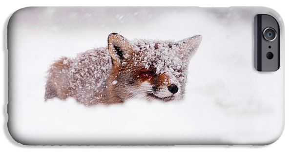 Fox IPhone Case featuring the photograph 50 Shades Of White And A Touch Of Red by Roeselien Raimond