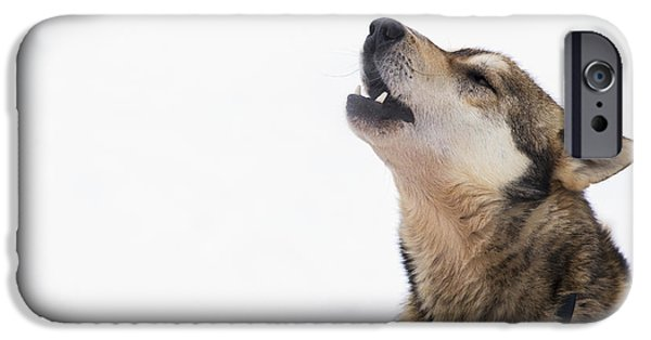 A Dropped Iditarod Sled Dog Howls IPhone Case by Jeff Schultz