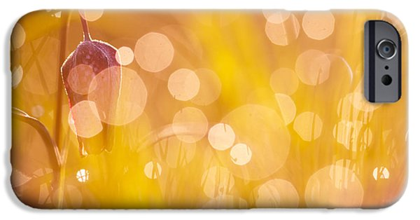 A Fairies Place IIi - Chess Flower IPhone Case by Roeselien Raimond