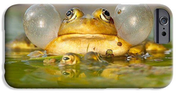 A Frog's Life IPhone 6s Case by Roeselien Raimond