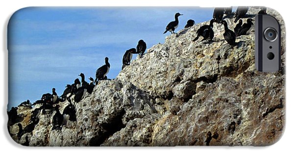 A Gulp Of Cormorants IPhone 6s Case by Sandy Taylor