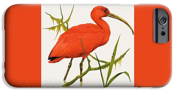 A Scarlet Ibis From South America IPhone 6s Case by Kenneth Lilly