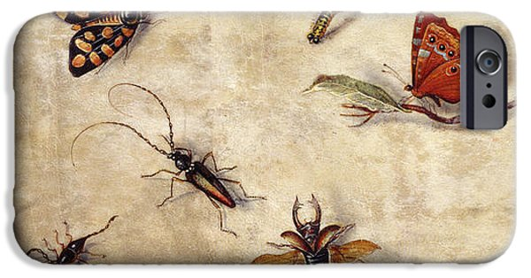 A Study Of Various Insects, Fruit And Animals IPhone Case by Jan Van Kessel the Elder