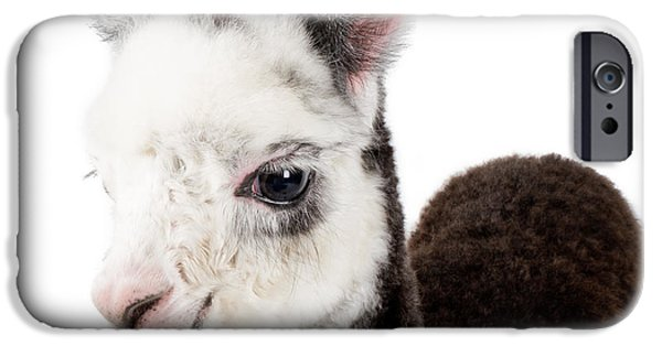 Adorable Baby Alpaca Cuteness IPhone 6s Case by TC Morgan