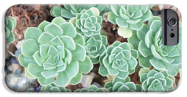 Aeonium IPhone Case by Art Spectrum
