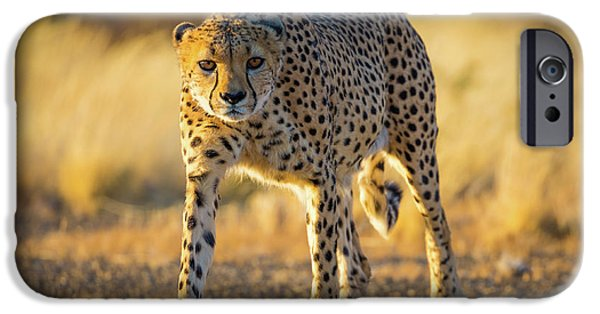 African Cheetah IPhone 6s Case by Inge Johnsson