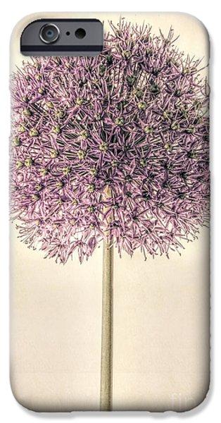 Allium Alone IPhone Case by John Edwards