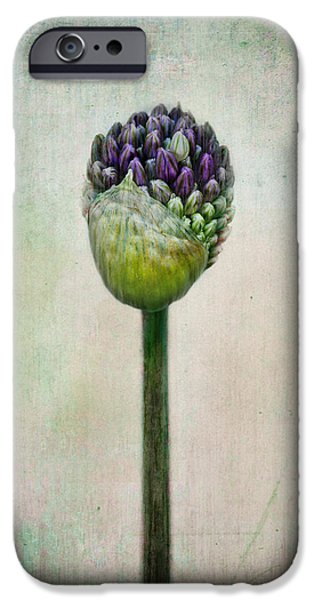 Allium Bud IPhone Case by Maggie Terlecki