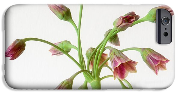 Allium Siculum Or Sicilian Honey Garlic IPhone Case by Janet Burdon