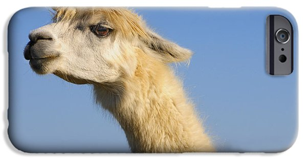 Alpaca IPhone Case by Skip Hunt