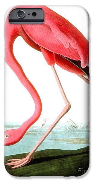 American Flamingo IPhone Case by John James Audubon