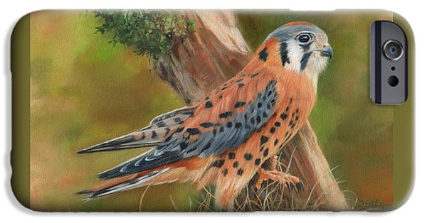 American Kestrel IPhone Case by David Stribbling