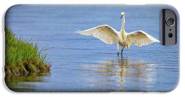 An Egret Spreads Its Wings IPhone Case by Rick Berk