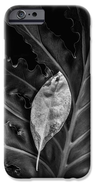 And I Will Catch You If You Fall IPhone Case by Tom Mc Nemar