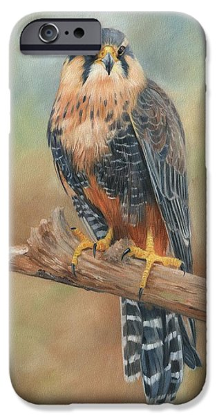 Aplomado Falcon IPhone Case by David Stribbling