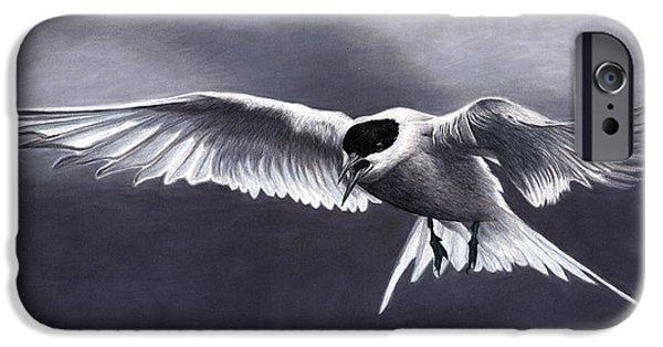 Arctic Tern IPhone Case by Corrina Thurston