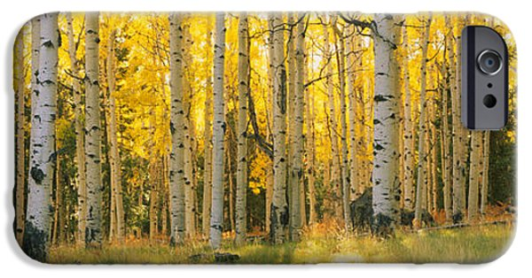 Aspen Trees In A Forest, Coconino IPhone Case by Panoramic Images
