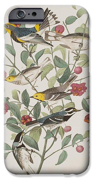 Audubons Warbler Hermit Warbler Black-throated Gray Warbler IPhone 6s Case by John James Audubon