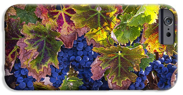 autumn Grapes IPhone Case by Garry Gay