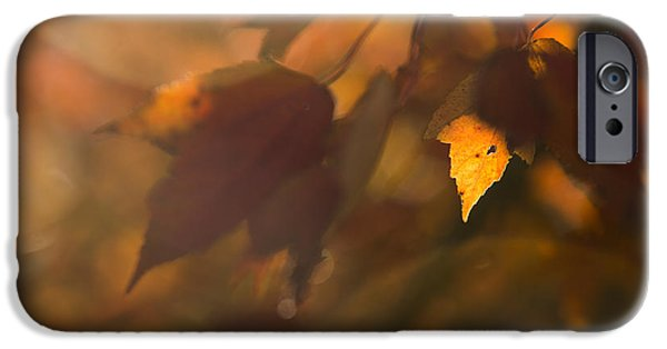 Autumn Leaf In Sunshine IPhone Case by Diane Diederich