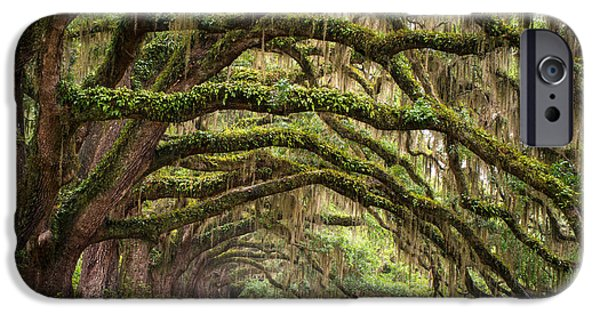 Avenue Of Oaks - Charleston Sc Plantation Live Oak Trees Forest Landscape IPhone Case by Dave Allen