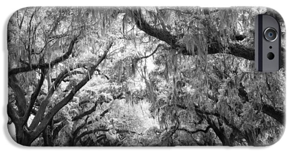 Avenue Of Oaks Charleston South Carolina IPhone Case by Stephanie McDowell