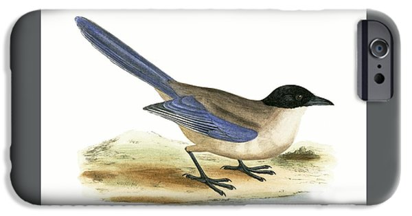 Azure Winged Magpie IPhone 6s Case by English School