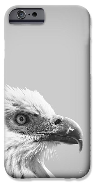 Bald Eagle IPhone Case by Delphimages Photo Creations