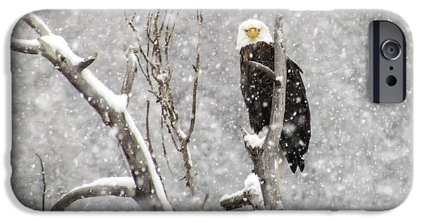 Bald Eagle In A Blizzard 3 IPhone Case by LeAnne Perry