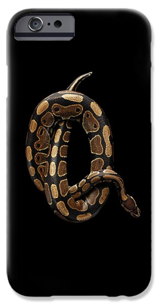 Ball Or Royal Python Snake On Isolated Black Background IPhone 6s Case by Sergey Taran