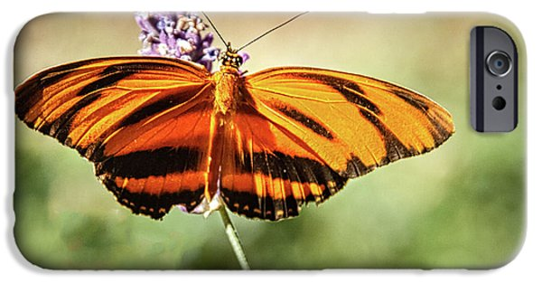 Banded Orange Heliconian Butterfly  IPhone Case by Robert Bales