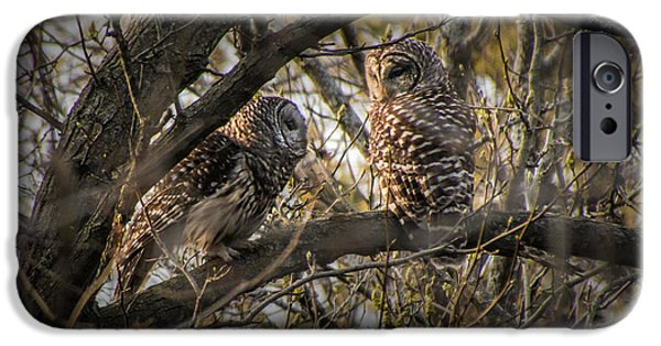 Barred Owls Perched On A Tree Branch IPhone Case by Randall Nyhof