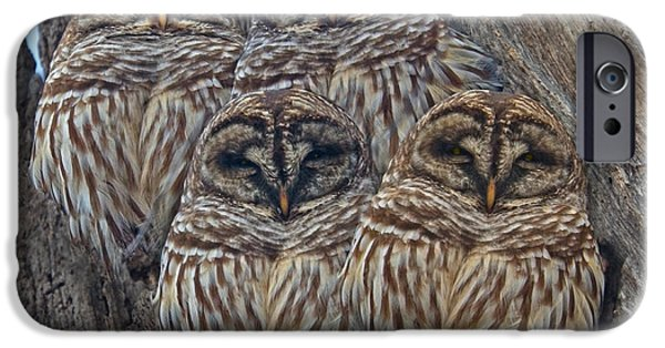 Barred Owls Who Are You IPhone Case by Betsy C Knapp